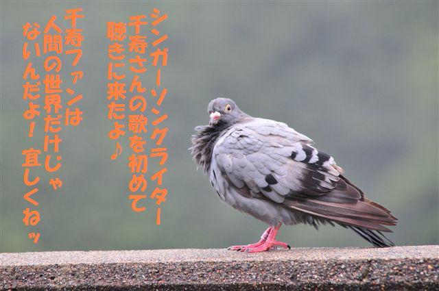 絶景カフェライブ (27)