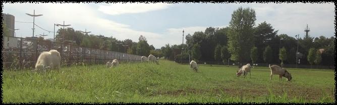 立川の山羊さん