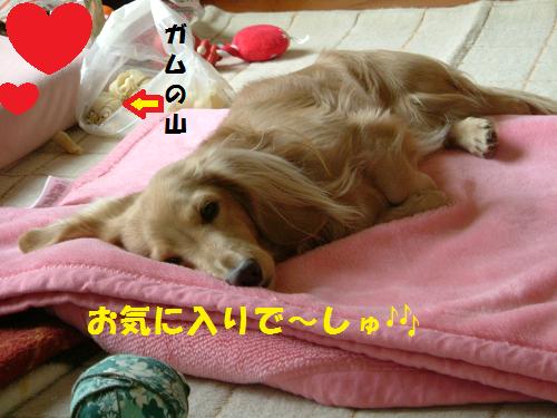 お気に入りの毛布の上で☆