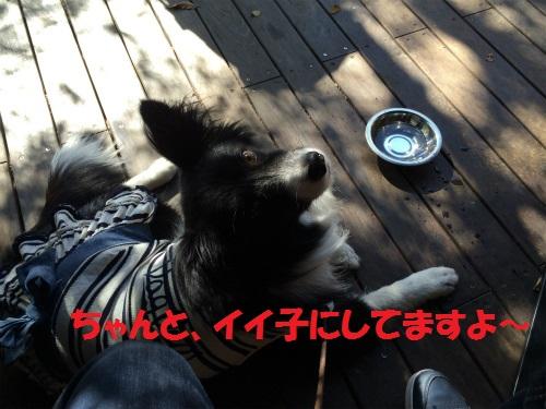 024_20151016235614ae4.jpg