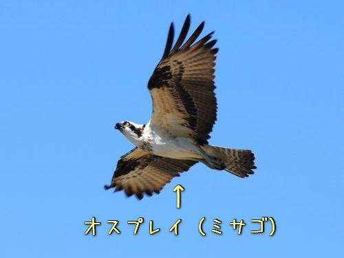 3e389a6c.jpg