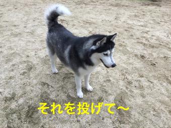 IMG_2333_Fotor.jpg