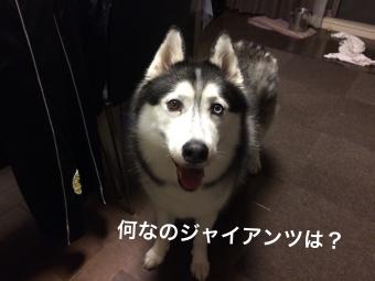 IMG_2349_Fotor.jpg