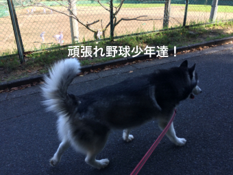 IMG_2399_Fotor.jpg