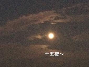 IMG_2425_Fotor.jpg