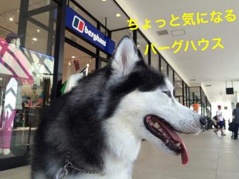 IMG_7028_Fotor.jpg