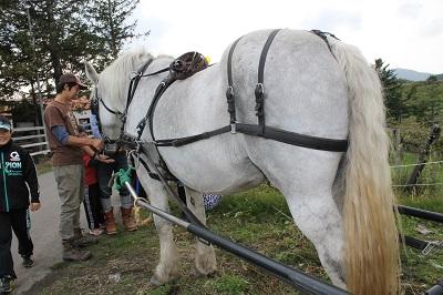 馬車で巡る  2015-10-11 (7)