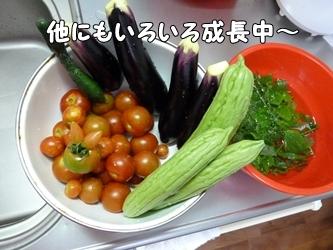 ブログ用001-2015 07 15-173227