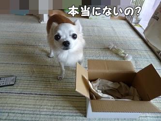 ブログ用004-2015 09 05-132817