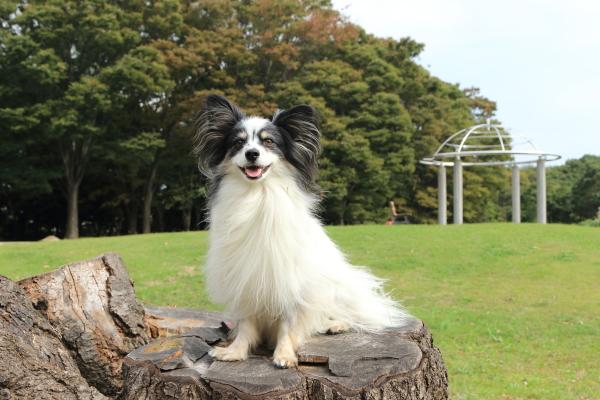 森林公園&犬@写真部写真展