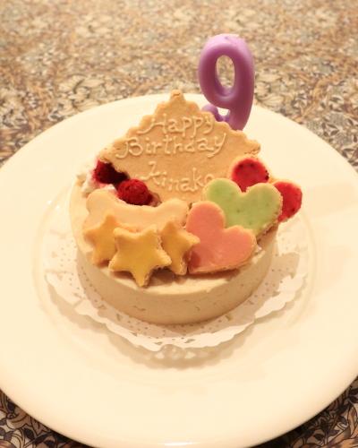 きなこ9才の誕生日 2015