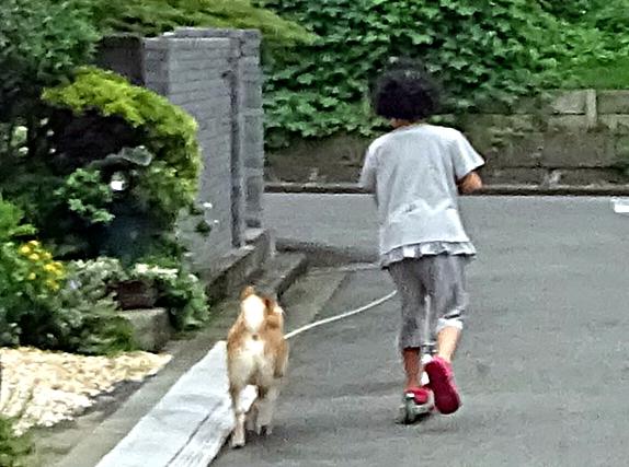 DSC03022危ない犬の散歩