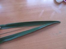 シュロの葉バッタ (3)