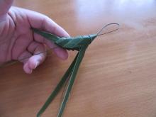 シュロの葉バッタ (6)