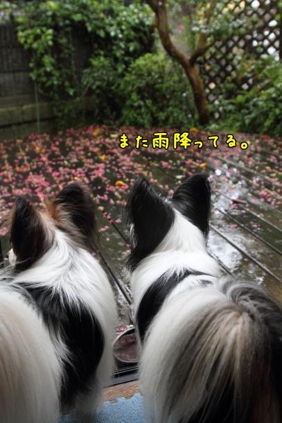 IMG_1083台風の日台風の日