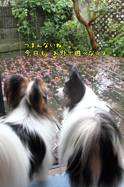 IMG_1084台風の日台風の日