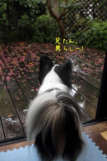 IMG_1086台風の日台風の日