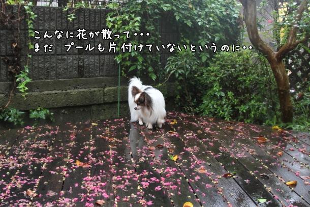 IMG_1073台風の日台風の日