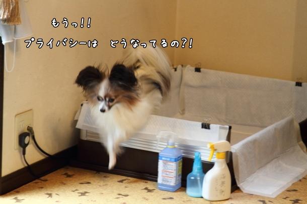 IMG_1094台風の日台風の日