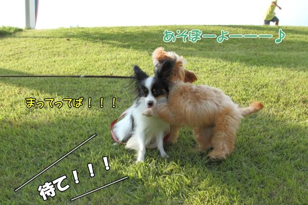 IMG_1754三川公園三川公園