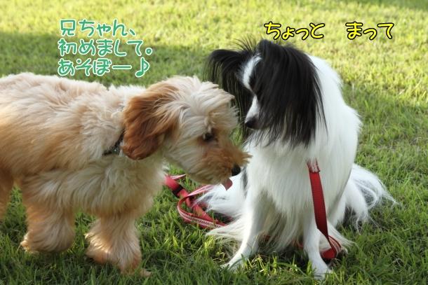 IMG_1756三川公園三川公園