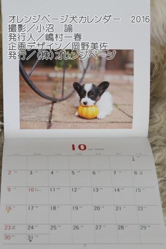 IMG_1983アランくんカレンダー