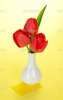 depositphotos_32290259-Beautiful-red-tulips-in-a-vase-on-a-yellow-background.jpg