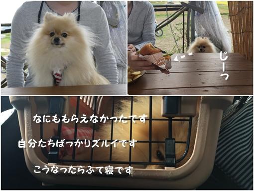 cats_20151015164301045.jpg