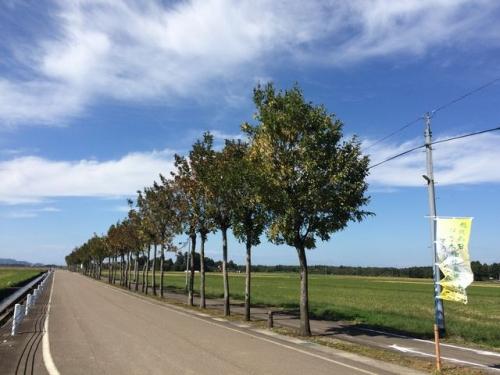 2015-10-03米岡のはさ木