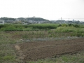 H27.9.15冬野菜場所準備(畑④、1.2a)@IMG_6252