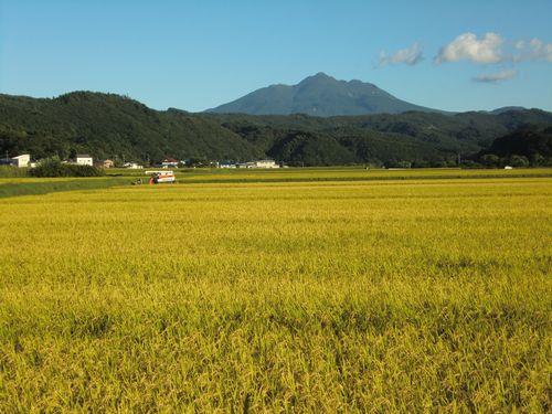 003赤石川の田んぼ
