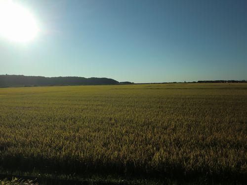 002赤石川の田んぼ