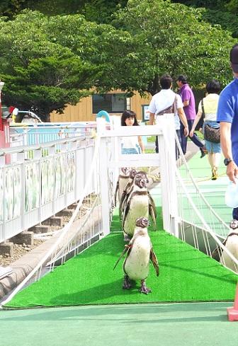 ペンギンパレード6