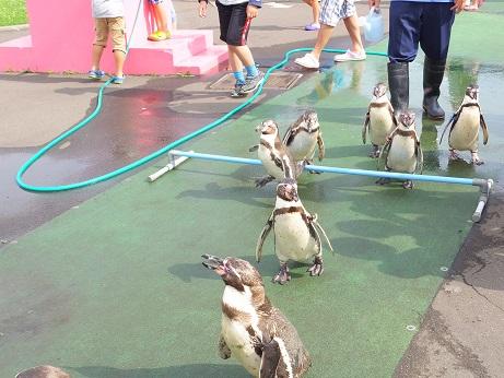 ペンギンパレード7