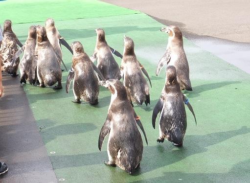 ペンギンパレード8