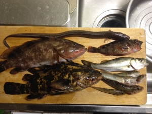 まな板の上の釣った魚たち(四日市霞埠頭 2015.10.08)