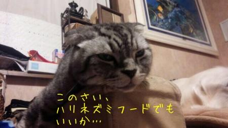 20151012204100216.jpg