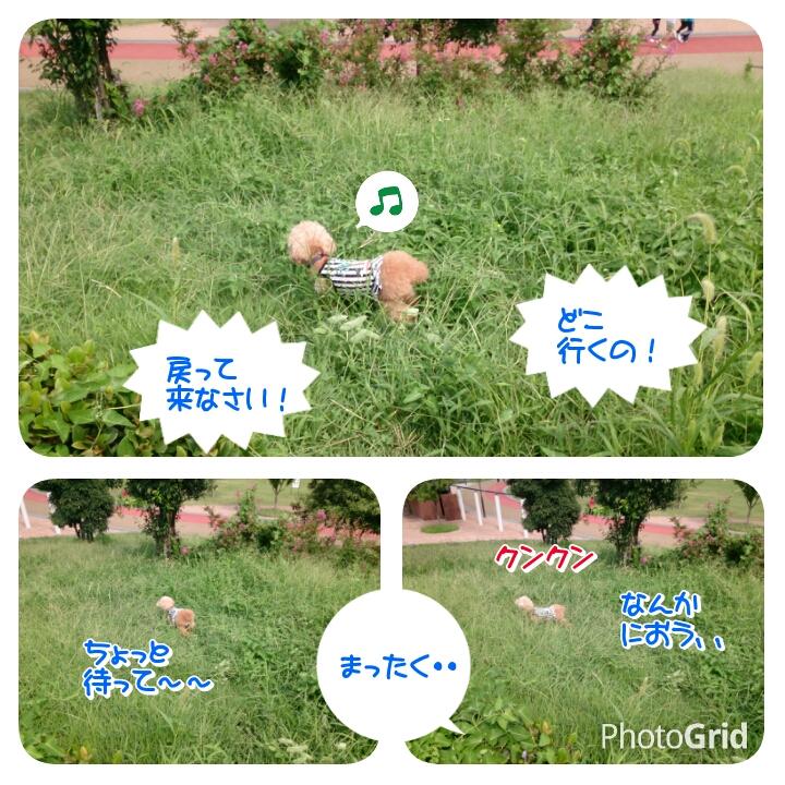 201509211532497e4.jpg