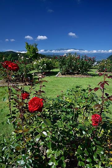 バラの花咲く高遠ローズガーデンしんわの丘