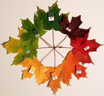 800px-Autumn_leaves_(pantone)_crop.jpg
