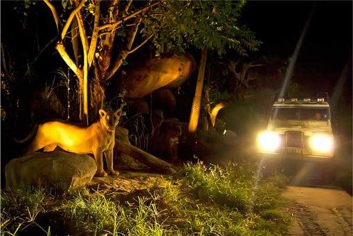 full_night-safari_1422849553.jpg
