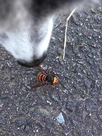 2015 10 22 ココアとハチ