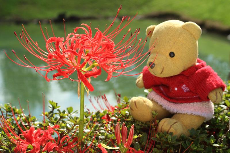 彼岸花を見る 駿府城公園 150919