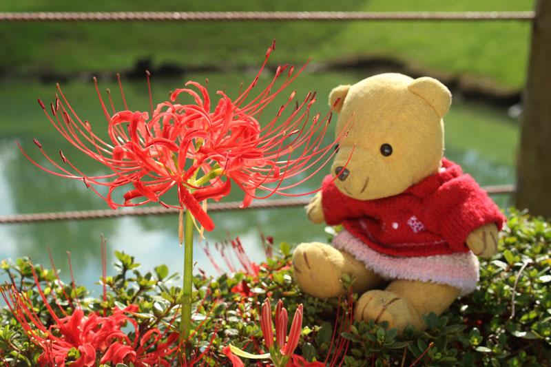 彼岸花を見る 駿府城公園 元 150919