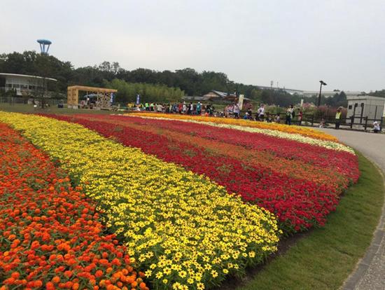 花と緑の夢マラソン1