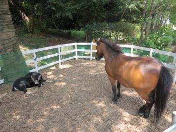 ・山羊さんと馬さん