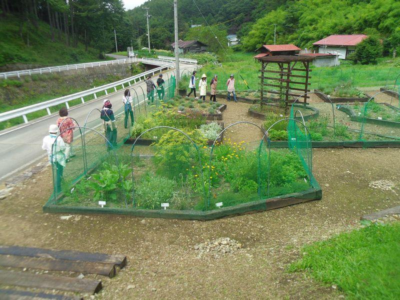 garden_2015082800462133c.jpg
