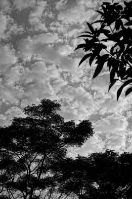 shimizu-august-sky-2.jpg