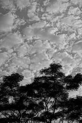 shimizu-august-sky.jpg