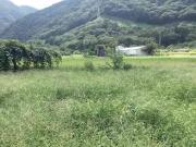 畑(その2)before